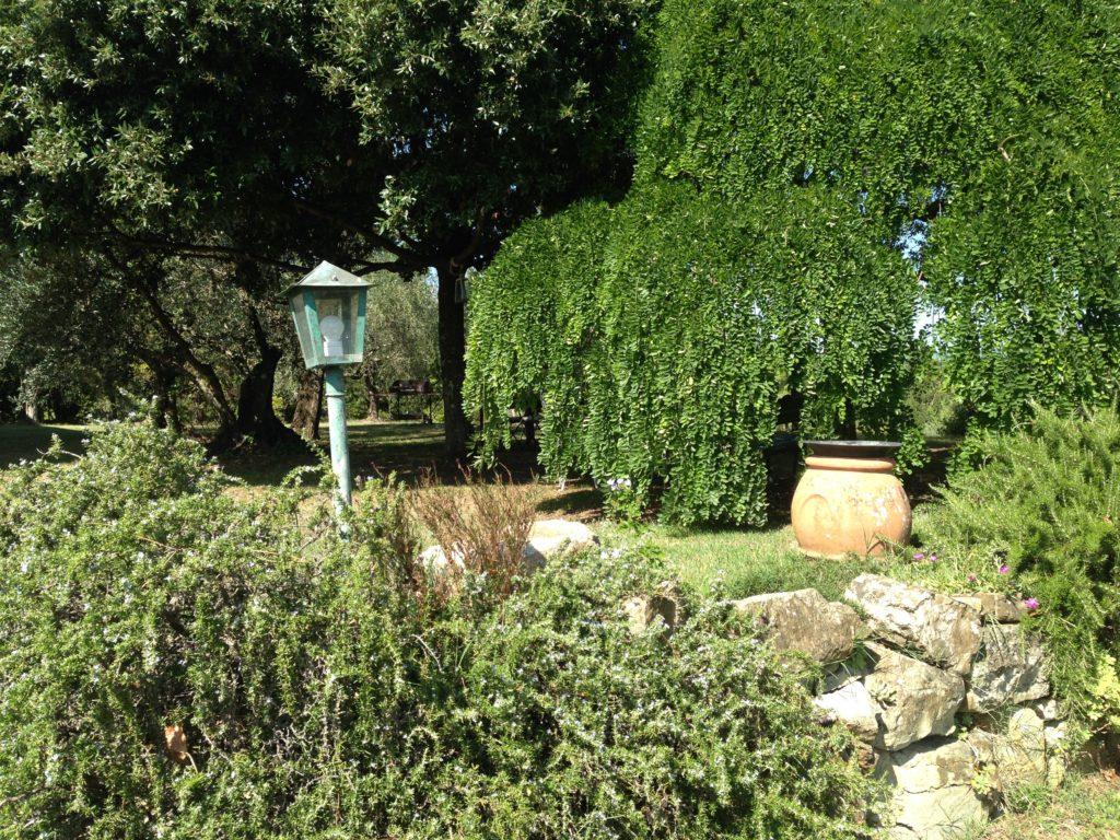 Fra hagen vår